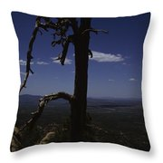 A Gnarled Tree In Arizona Throw Pillow by Stacy Gold
