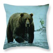 A Kodiak Brown Bear Ursus Middendorfii Throw Pillow by George F. Mobley