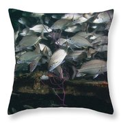 A Large School Of Tomtate Throw Pillow by Michael Wood