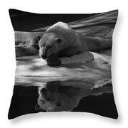 A Polar Bear Reflects Throw Pillow by Karol Livote