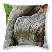 A Remarkable Tree - Duncan Western Red Cedar Olympic National Park WA Throw Pillow by Christine Till
