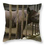 A Rhino At The Sedgwick County Zoo Throw Pillow by Joel Sartore