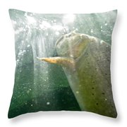 A Snake River Fine Spotted Cutthroat Throw Pillow by Drew Rush