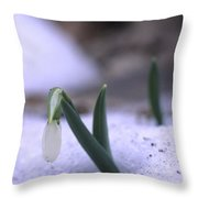 A Snowdrop Pushes Through The Snow Throw Pillow by Taylor S. Kennedy