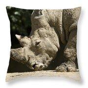 A White Rhino Sniffs The Dust Throw Pillow by Joel Sartore