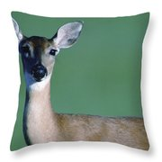 A White-tailed Deer On The Prairie Throw Pillow by Joel Sartore