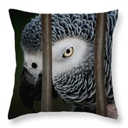 African Grey Throw Pillow by Robert Meanor