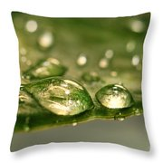 After The Rain Throw Pillow by Sandra Cunningham