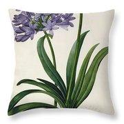 Agapanthus Umbrellatus Throw Pillow by Pierre Redoute