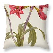 Amaryllis Brasiliensis Throw Pillow by Pierre Redoute