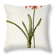 Amaryllis Curvifolia Throw Pillow by Pierre Redoute