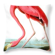 American Flamingo Throw Pillow by John James Audubon