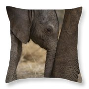 An Elephant Calf Finds Shelter Amid Throw Pillow by Michael Nichols