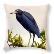 Audubon Blue Throw Pillow by Karen Wiles