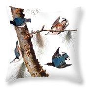 Audubon: Nuthatch Throw Pillow by Granger