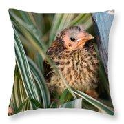 Baby Bird Hiding In Grass Throw Pillow by Douglas Barnett