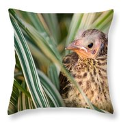 Baby Bird Peering Out Throw Pillow by Douglas Barnett