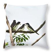 Baby Birds - Eastern Kingbird Family Throw Pillow by Christina Rollo