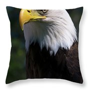 Bald Eagle Throw Pillow by JT Lewis
