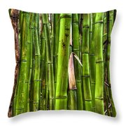 Bamboo Throw Pillow by Dustin K Ryan