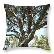 Banyan Tree Throw Pillow by Anna Villarreal Garbis