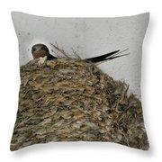 Barn Swallow Hirundo rustica Throw Pillow by Douglas Barnett
