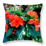 Begonia Plant Throw Pillow by Corey Ford
