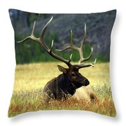 Big Bull 2 Throw Pillow by Marty Koch