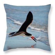 Black Skimmer Throw Pillow by Barbara Bowen
