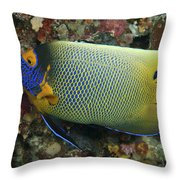 Blue Face Angelfish Throw Pillow by Steve Rosenberg - Printscapes