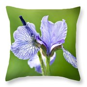 Blue Iris Germanica Throw Pillow by Frank Tschakert