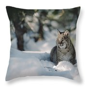 Bobcat Lynx Rufus Adult Resting In Snow Throw Pillow by Michael Quinton