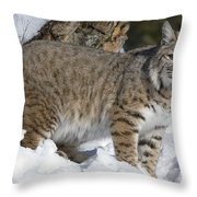 Bobcat Lynx Rufus In The Snow Throw Pillow by Matthias Breiter