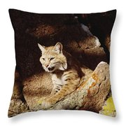 Bobcat Lynx Rufus Portrait On Rock Throw Pillow by Gerry Ellis