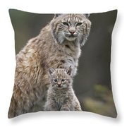 Bobcat Mother And Kitten North America Throw Pillow by Tim Fitzharris