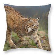 Bobcat Stalking North America Throw Pillow by Tim Fitzharris