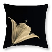 Botanical Study 3 Throw Pillow by Brian Drake - Printscapes