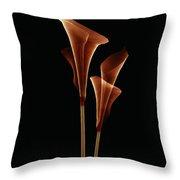 Botanical Study 5 Throw Pillow by Brian Drake - Printscapes