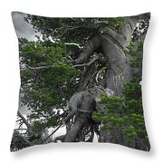 Bristlecone Pine tree on the rim of Crater Lake - Oregon Throw Pillow by Christine Till