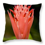 Bromeliad Flower, An Epiphyte From C & Throw Pillow by Tim Laman