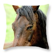 Brown Horse With Sultry Eye . R5907 Throw Pillow by Wingsdomain Art and Photography