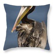 Brown Pelican Preening La Jolla Throw Pillow by Sebastian Kennerknecht