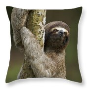 Brown-throated Three-toed Sloth Throw Pillow by Ingo Arndt