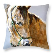 Buck Of The Morgan Horse Ranch Point Reyes National Seashore Throw Pillow by Paul Miller