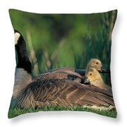 Canada Goose With Goslings Throw Pillow by Alan and Sandy Carey and Photo Researchers