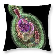 Candida Albicans Throw Pillow by Russell Kightley