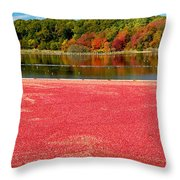 Cape Cod Cranberry Bog Throw Pillow by Matt Suess