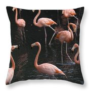 Caribbean Flamingoes At The Sedgwick Throw Pillow by Joel Sartore