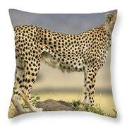 Cheetah Acinonyx Jubatus On Termite Throw Pillow by Winfried Wisniewski