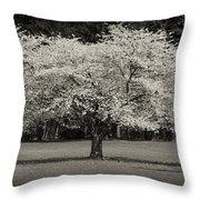 Cherry Blossom Tree - Ocean County Park Throw Pillow by Angie Tirado